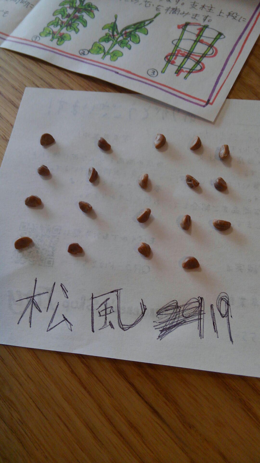160412_松風(大輪朝顔)